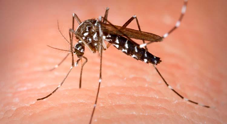 repelente-mosquito-tigre-farmacia